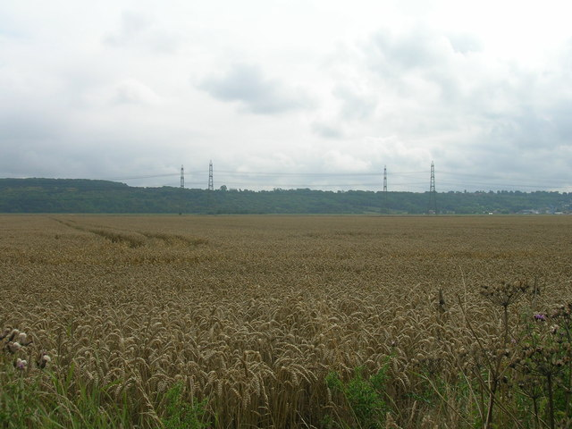 Farmland off Ness Lane