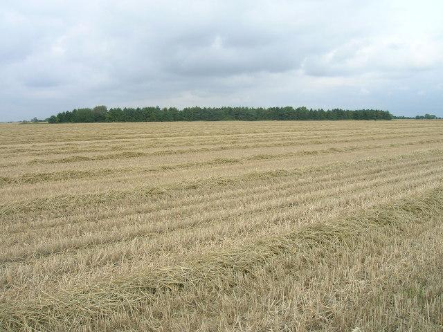 Farmland north of Garthorpe