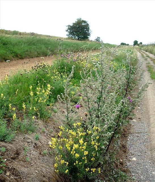 Downland flowers