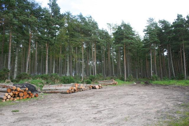 Trees Felled