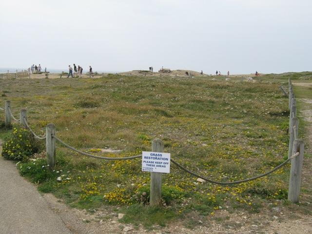 Crown Estate land undergoing grassland regeneration