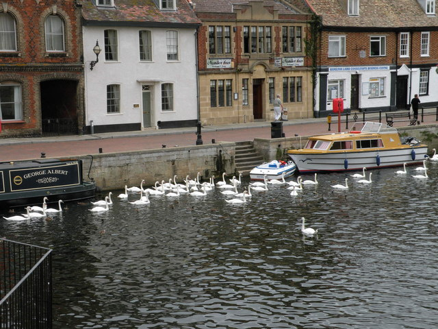 Swanning about on the Ouse