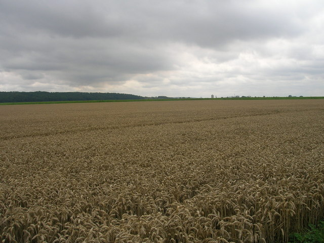 Farmland near Waterton Hall