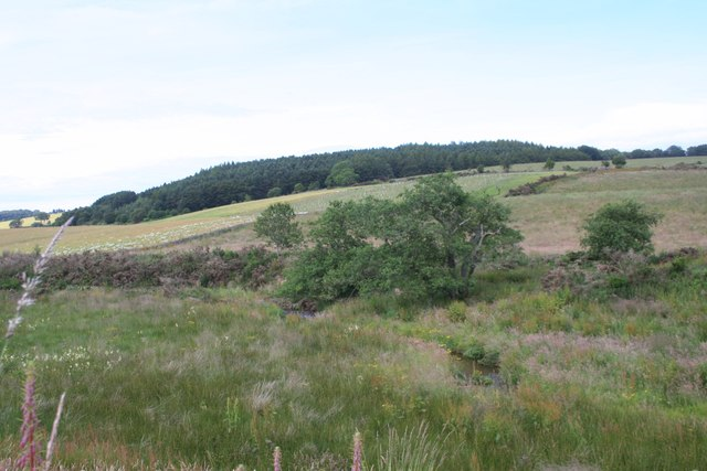 Wetland by the Burn