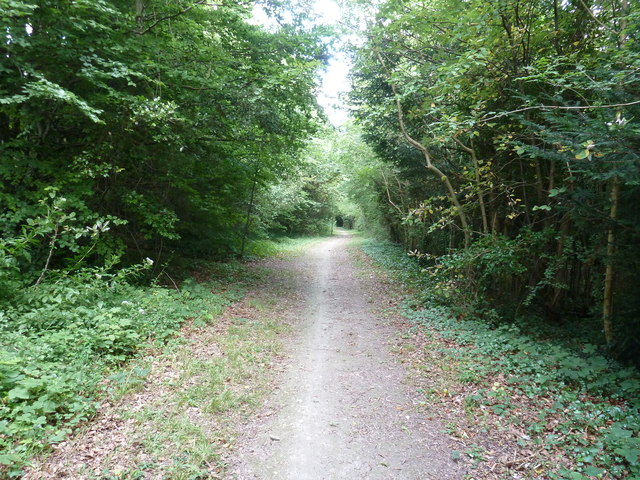 Bridleway in Seedlip Clump