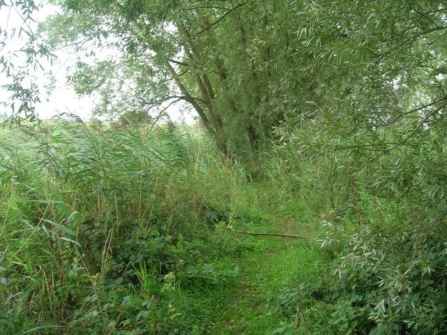 Path beside Three Rivers