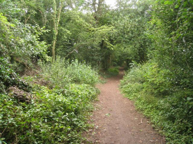 Pardown - Basingstoke footpath