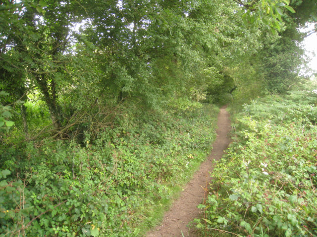 Pardown - Basingstoke path
