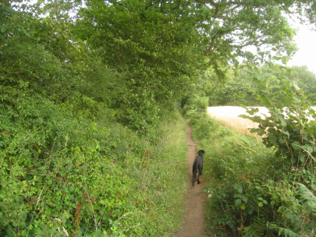 Approaching Small's Copse