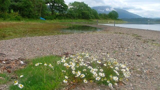Loch Etive Shoreline