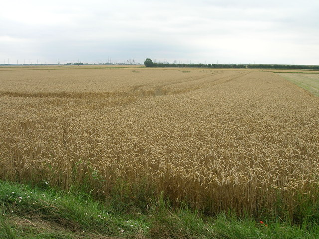 Farmland near Carr House