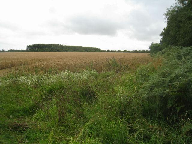 Farmland east of Small's Copse