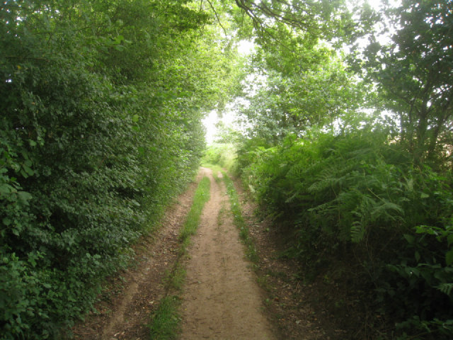 Track by Small's Copse