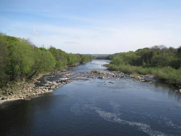River Tyne from Wylam Bridge