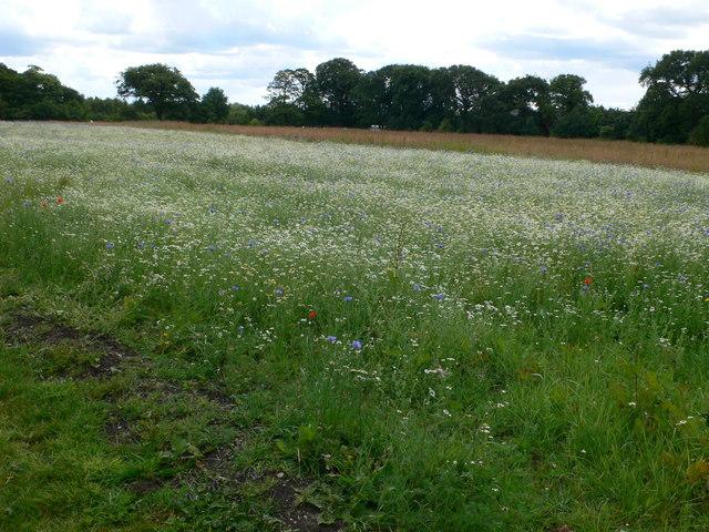 Fallow field, Speke Hall