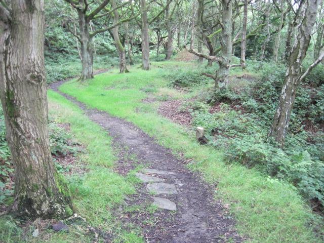 Footpath in Dean Wood, Netherton