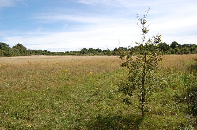 Grass field near Castweazel Farm