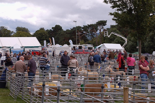 Sheep pens at Peebles Agricultural Show