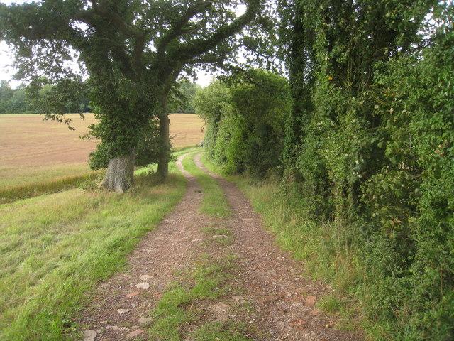 Track near Winter Down Coppice