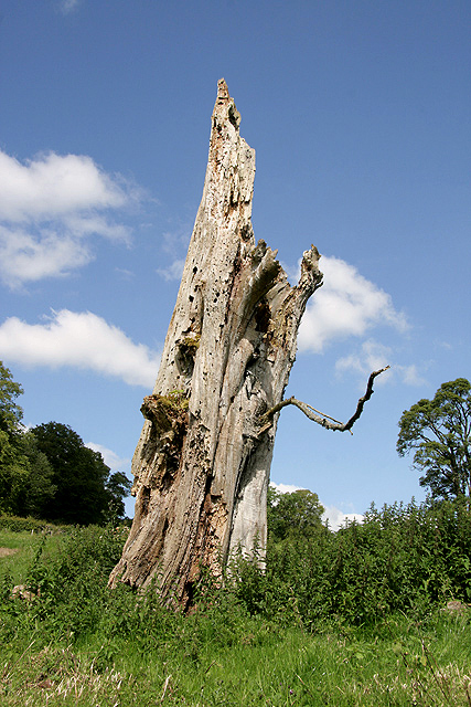 A decaying tree at Borthwickbrae