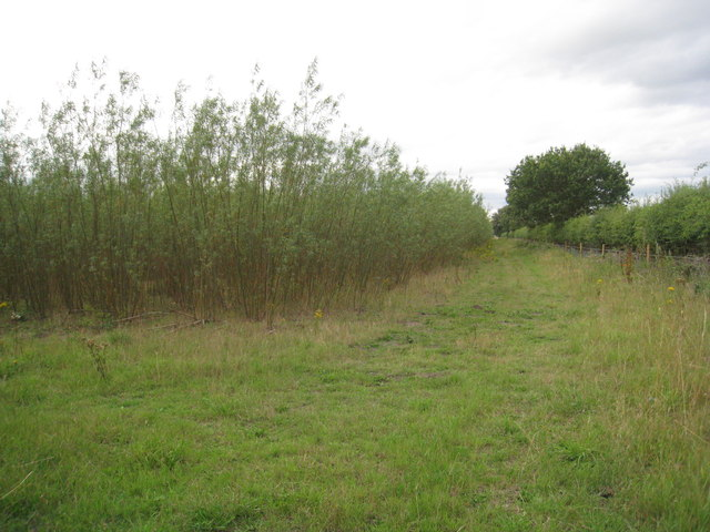 Willow plantation, Blyton Carrs