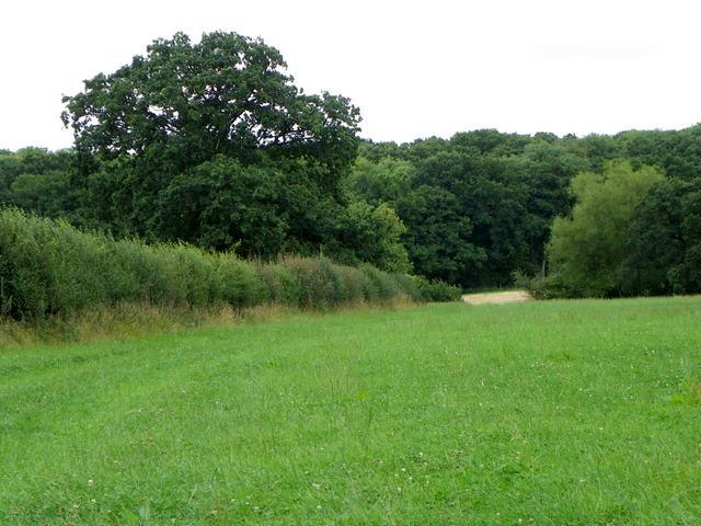 Field of clover near Horsington