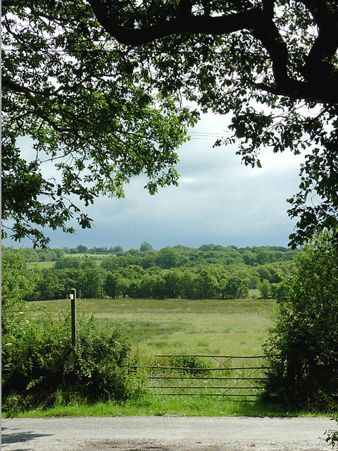 Rough grassland east of Comins Capel Betws, Ceredigion