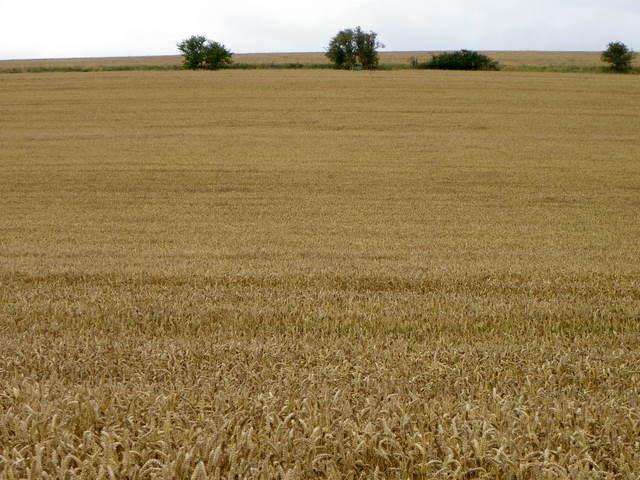Arable fields near Ogbourne St Andrew