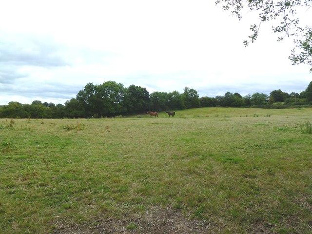 Chalbury Common, horse grazing