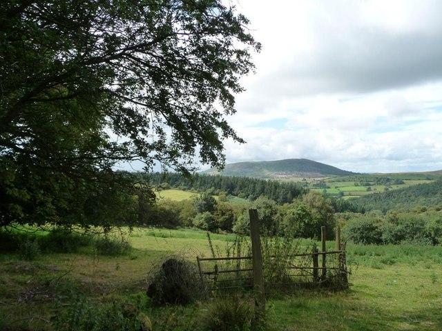 Wooded hillside west of Rock Farm