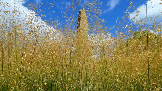 Tall Grass Bed and Monolith at RHS Harlow Carr