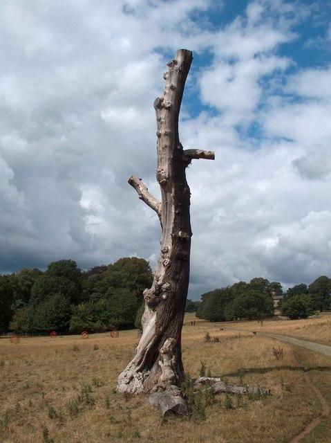Natural Sculpture - dead tree at Yorkshire Sculpture Park