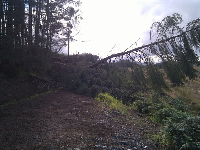 Forestry track blocked by wind-blown timber