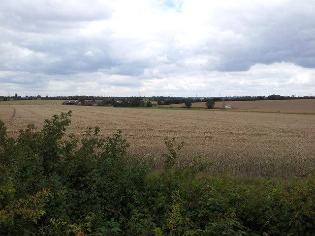 Wheat fields looking towards Thornbush Farm