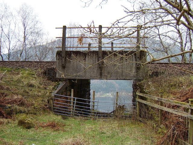 Sheep creep under West Highland Railway