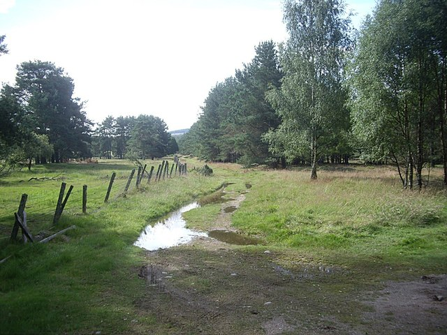 A farm track after rain