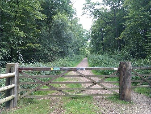 Gate and path into Brockishill Inclosure