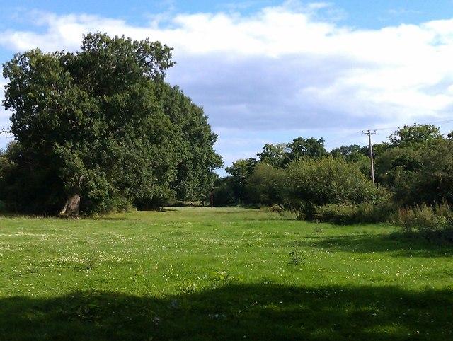 Streamside meadow, near Woodlands