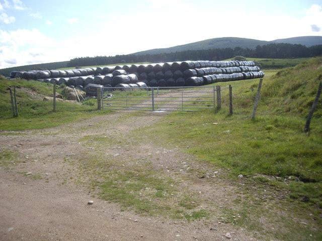 Plastic-wrapped hay bales near Dalbreak