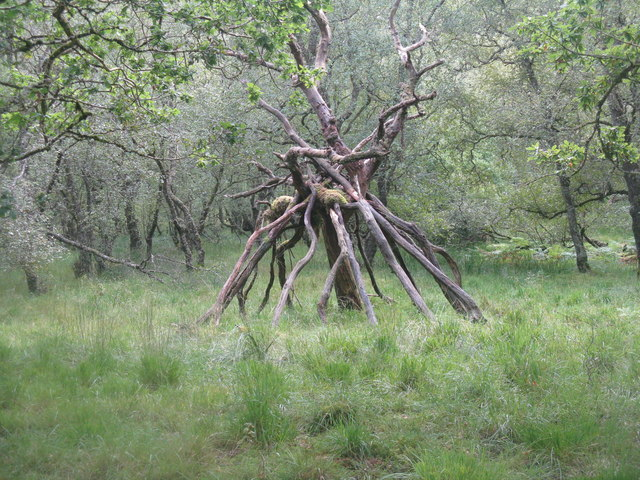 A strange wooden creature - still there a year later!