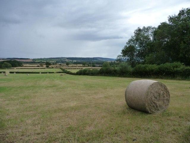 Shropshire Swiss roll