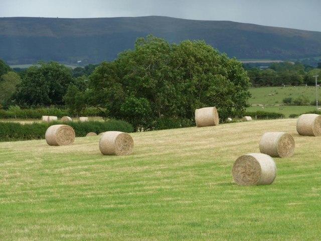 Shropshire Swiss rolls