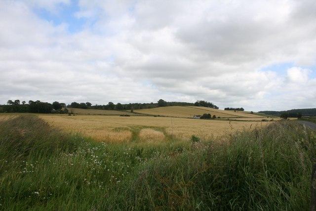 Roadside Field
