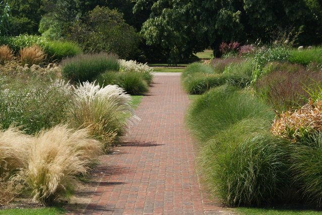 Varieties of grasses at Kew Gardens