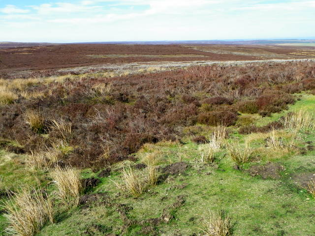 Managed moorland, Lofthouse Moor