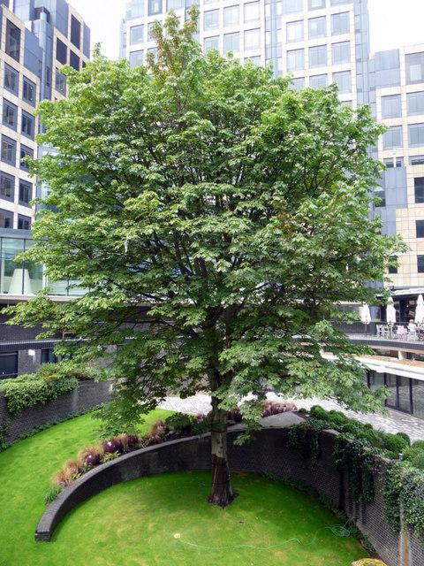 Sunken Garden, Barbican, London EC2