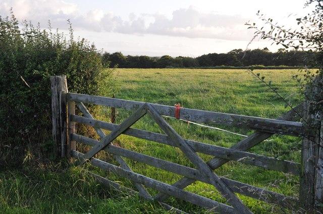 Mid Devon : Gate & Field