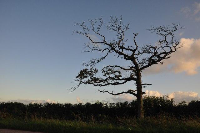 Mid Devon : Tree & Roadside