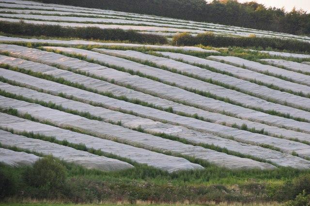 Mid Devon : Farm Field