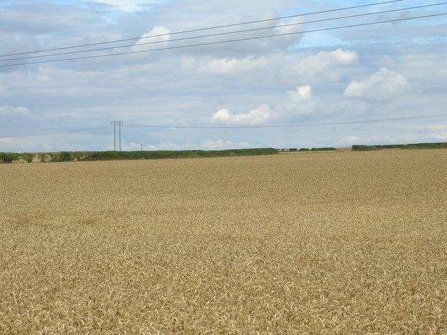 Farmland of Lamb Lane